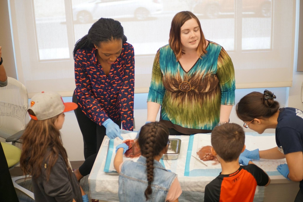 Larissa Check, Carly Keenan, and Jennifer Burkett teach the kids about the anatomy of the heart and kidney at the live organ station.